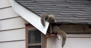 حيوان علي السطح