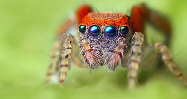 حشرات-غريبة-وعجيبة-بالصور_5077320774_o