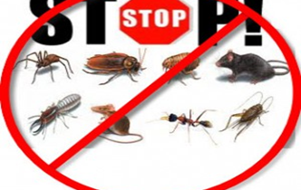 شركة-مكافحة-حشرات-بالمجمعه