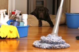 شركة تنظيف بالمجمعه – اتصل نصل 0558796867