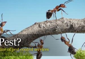 شركة مكافحة حشرات بجده 0558796867 شركة الأوائل