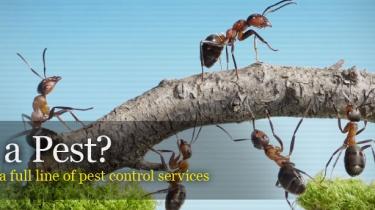 القضاء على الحشرات