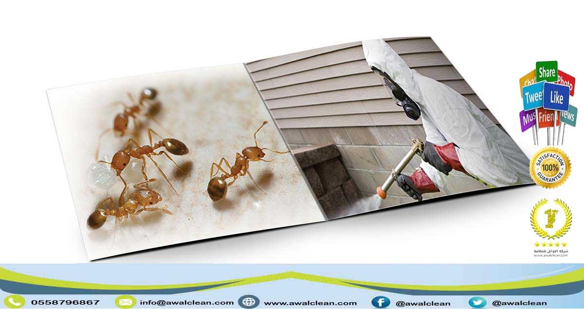 شركة مكافحة حشرات بالدوادمي 0558796867
