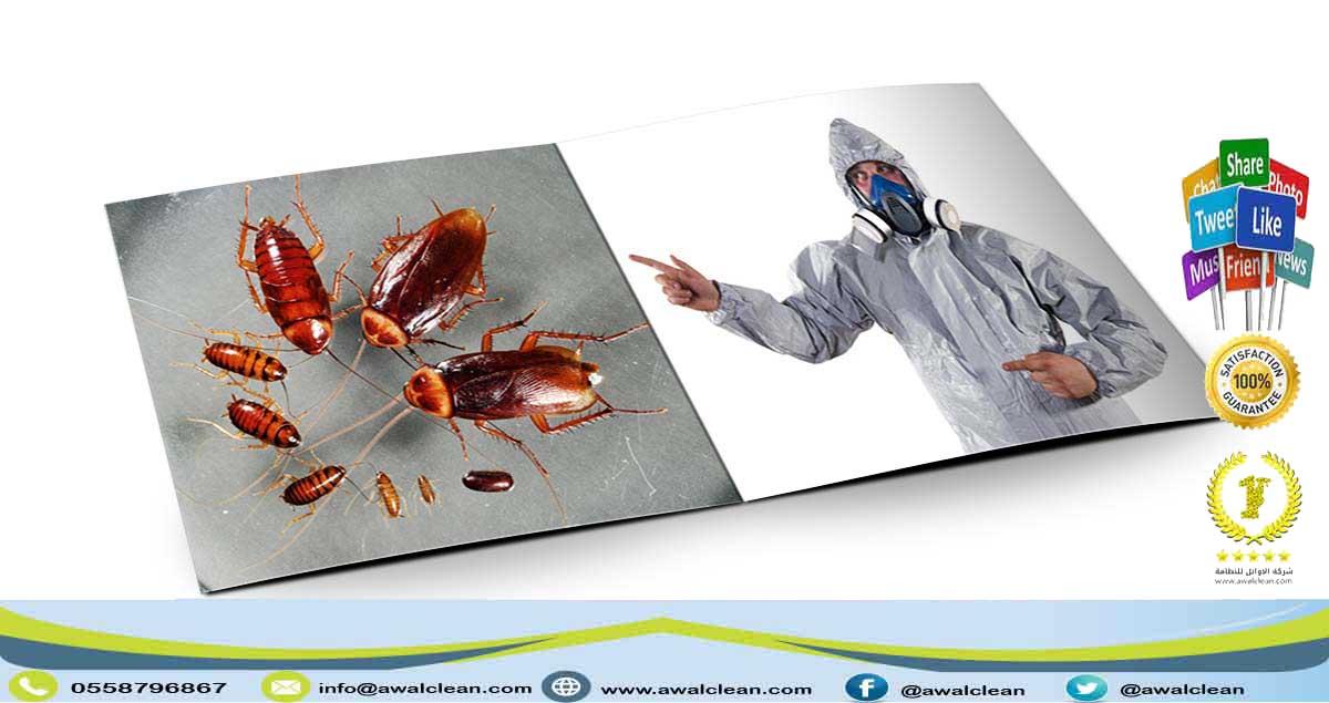 شركة مكافحة حشرات بالطائف 0558796867