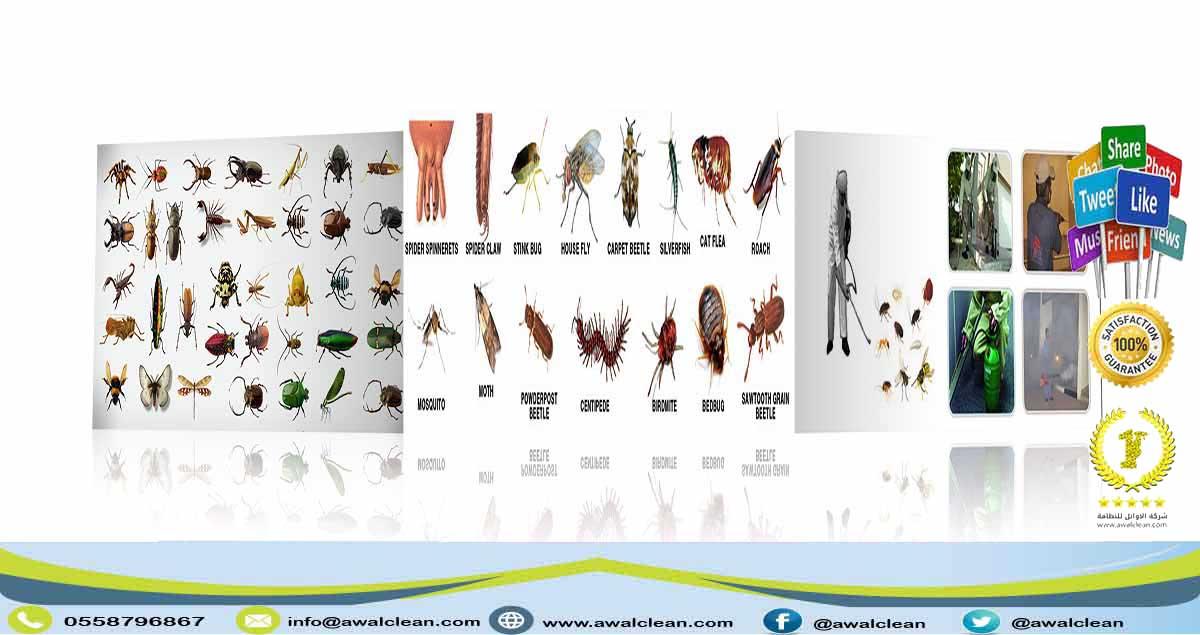 شركة مكافحة حشرات بالرس 0559138319