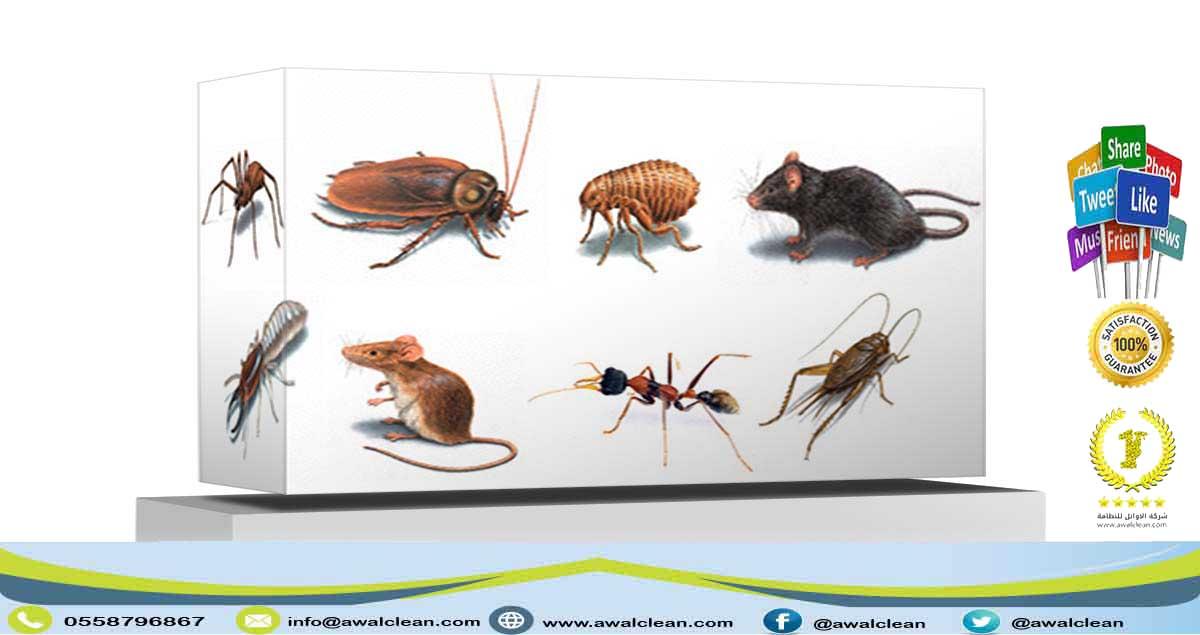 شركة مكافحة حشرات بعنيزة 0559138319