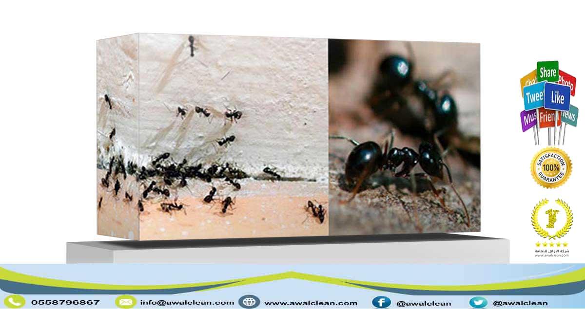 شركة مكافحة حشرات بجازان 0537782508 الاوائل في رش مبيدات