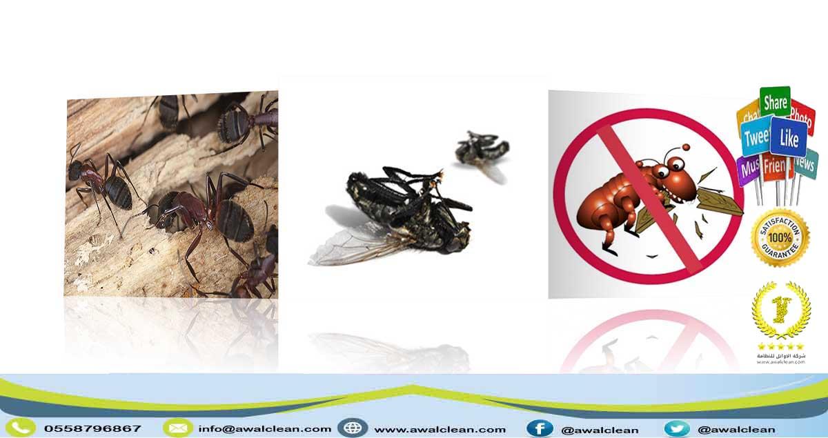 شركة مكافحة حشرات برماح 0558796867