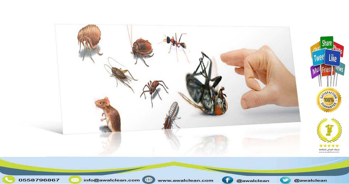 شركة مكافحة حشرات في الامارات