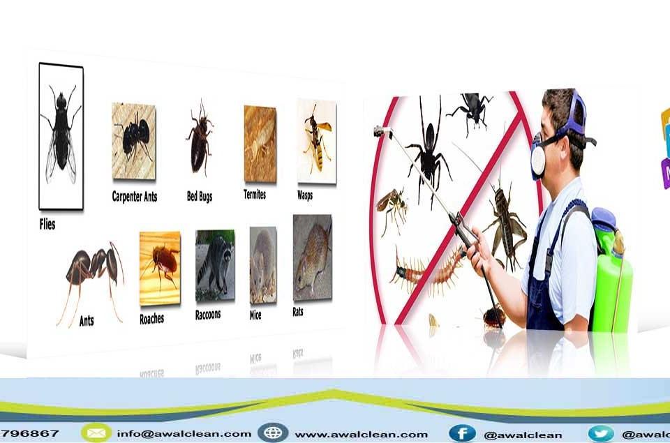 صور لحشرات و عامل مكافحة