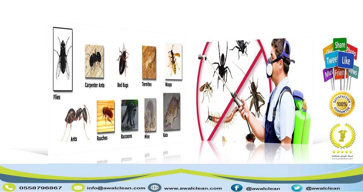 شركة رش مبيدات بالقوعية 0558796867