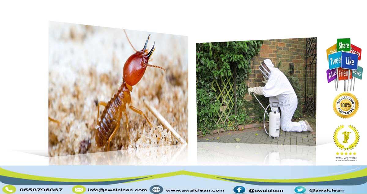 شركة رش مبيدات بالرويضة 0558796867
